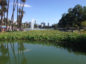 The lotuses and fountain of Echo Park Lake.  In the background, the downtown skyline.
